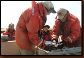 Gene Galinat (far left) supervises while Rick Zimbelman and Denny Bohls measure, tag, and clip a fin on a captured walleye at Orman Dam. Nancy Smidt documented the necessary information.