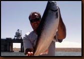Salmon caught by Tim Forsch at Oahe, July 4th, 2010.